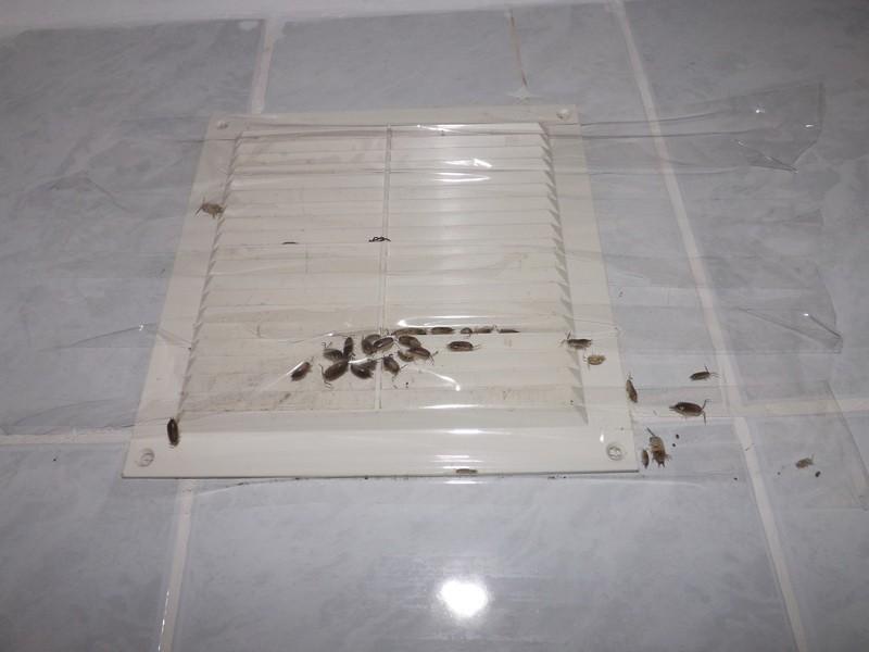 Насекомые в ванной комнате: причины появления, методы борьбы и варианты устранения (100 фото)